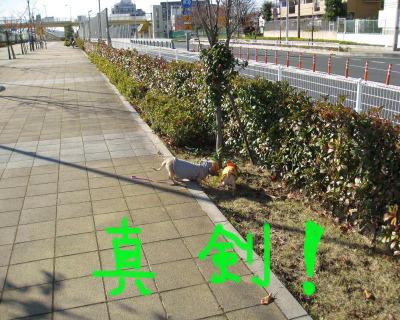 Img_4618_convert_20111206153454